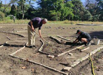 В Одесском ботаническом саду скоро появится лавандовый лабиринт (фото)