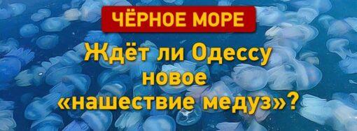Ждет ли Черное море в Одессе новое нашествие медуз?