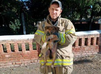 В Березовке извлекли из смертельной ловушки собаку, а в Одессе не дали погибнуть крошечным котятам (фото)