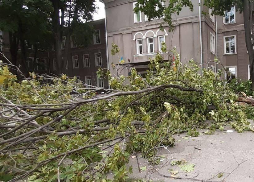 упала ветка дерева у школы2