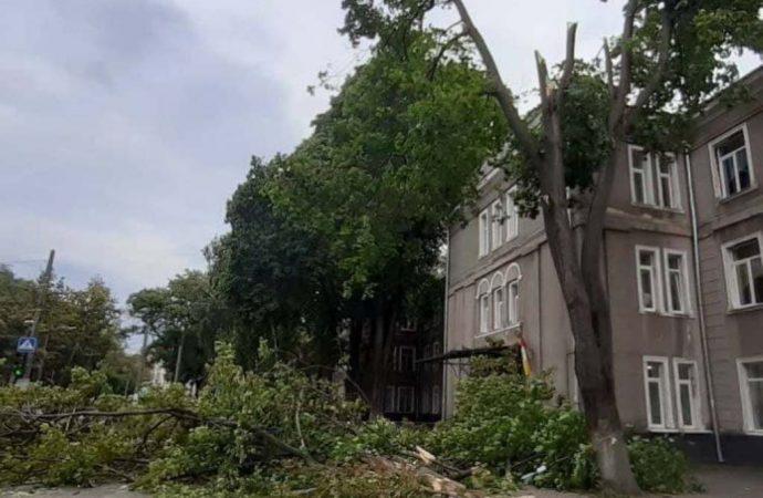 В Одессе ветка дерева «заблокировала» школьников (фото)