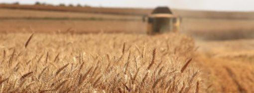 Украинские аграрии намолотили рекордное количество зерна – Одесская область в лидерах