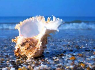 Акулы, осетры, крабы и тюлени: кто сейчас живет в Черном море?