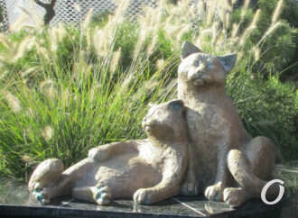 Рядом с Привозом завелись кошачьи «Шуры-муррры» (фото)