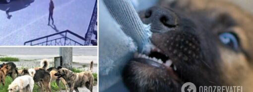 На поселке Котовского бездомные собаки напали на ребенка