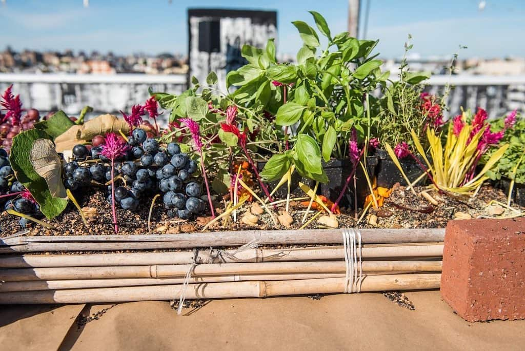 овощи на крыше
