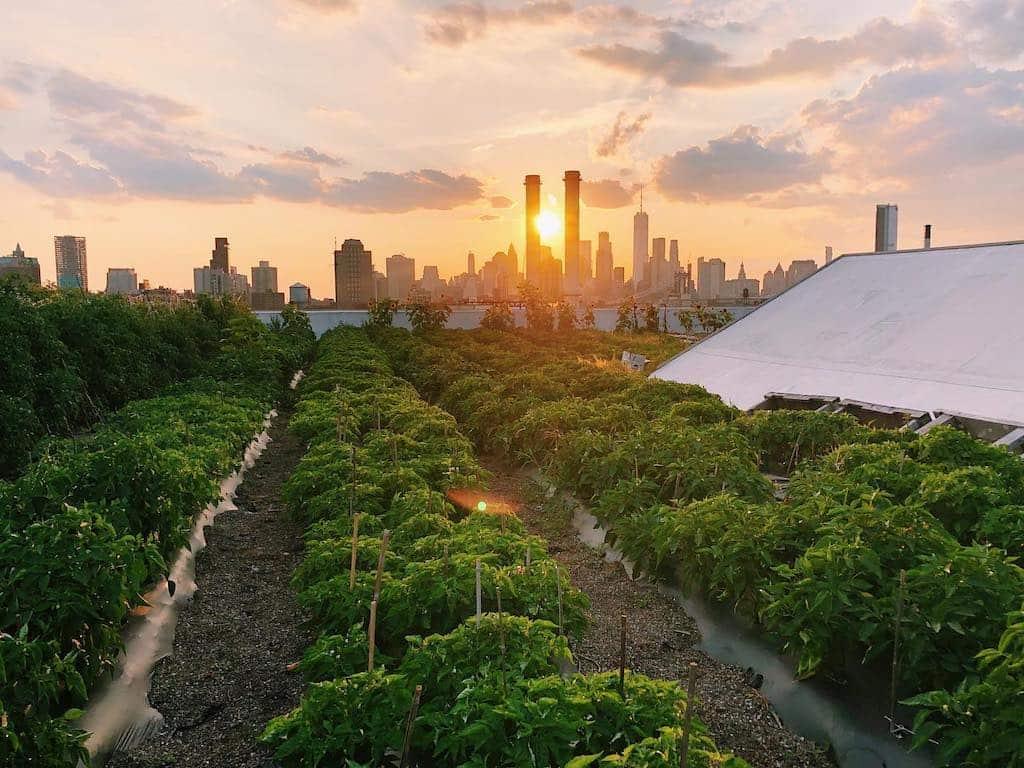 городское фермерство