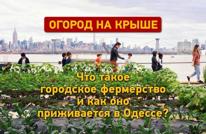Огород на крыше:как городское фермерство приживается в Одессе?