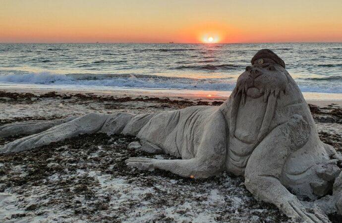 На одесском пляже поселился необычный морж (фото)