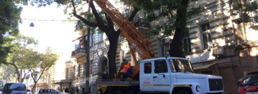 На улице Лейтенанта Шмидта в Одессе пилят деревья: что с проездом?