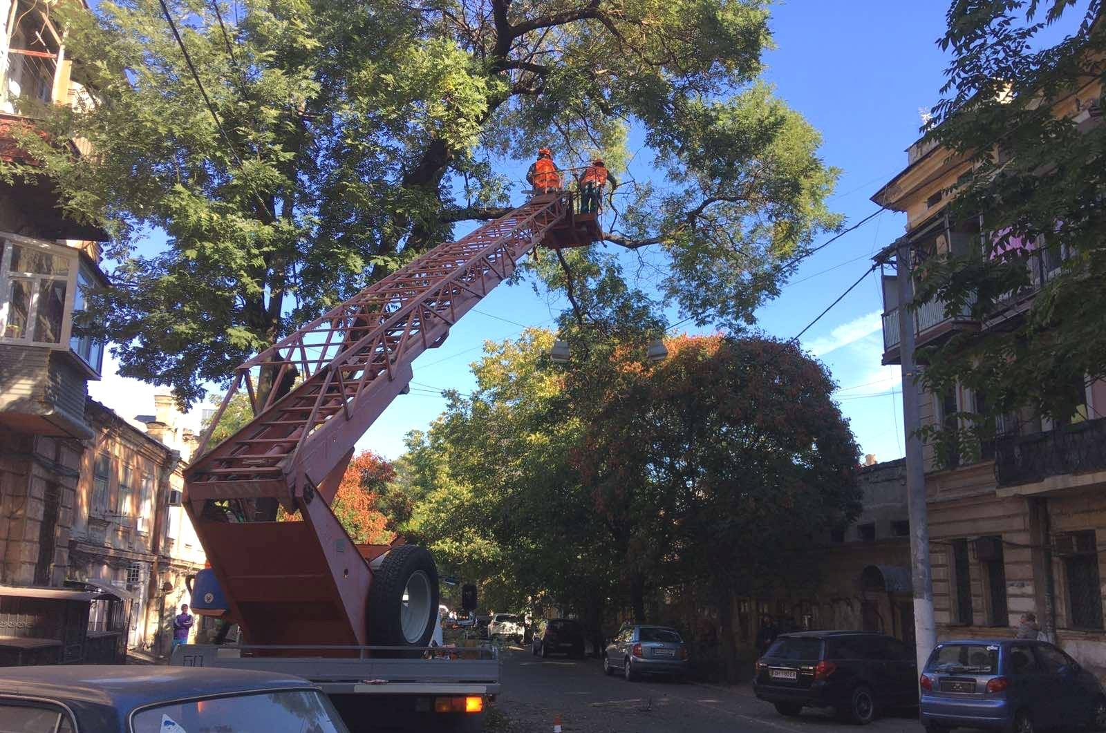 В Одессе собираются спилить 2 тыс. деревьев