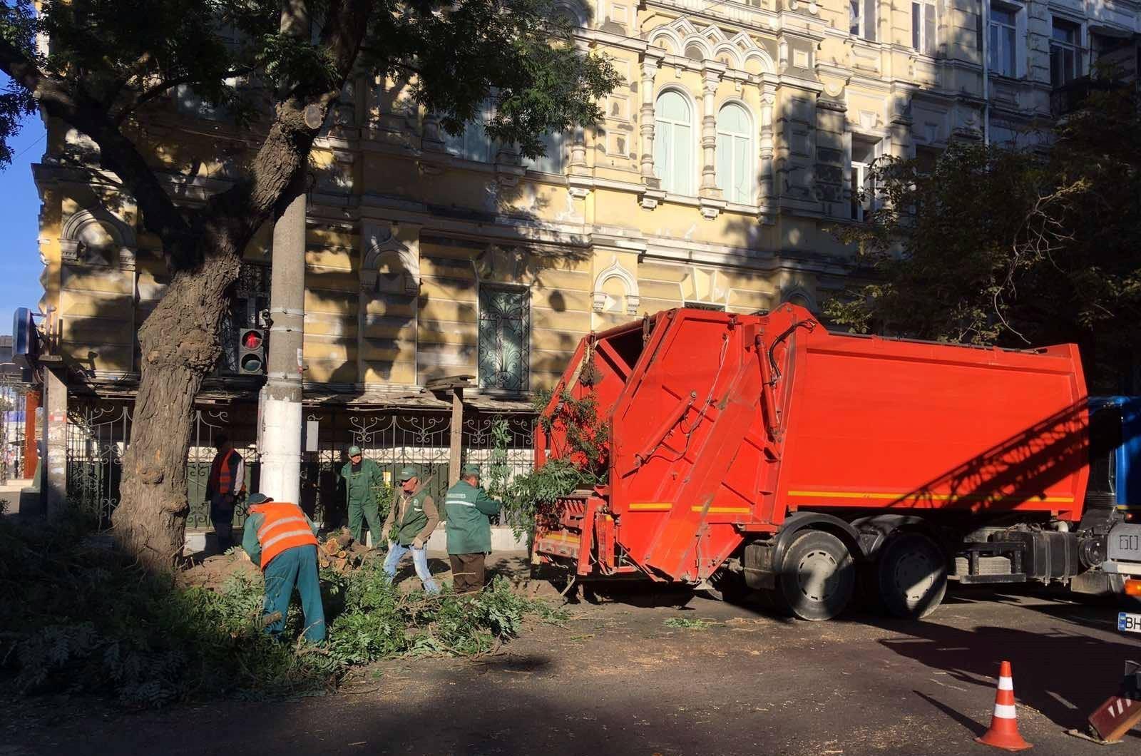 обрезка деревьев в Одессе