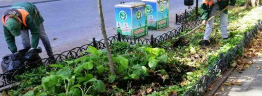 Одесский Приморский бульвар украсят цветы хосты (фото)