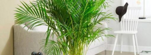 Неординарные комнатные деревья, пальмы и суккуленты от компании Украфлора